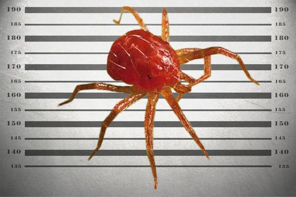 agrosur araña roja