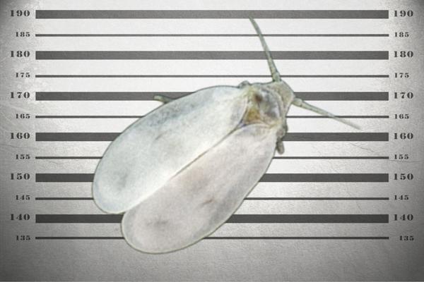 agrosur mosca blanca