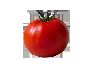 Importación tomate marroquí